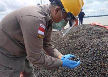 Petugas Balai Karantina Pertanian Tarakan memeriksa palm kernel yang akan di ekspor ke Malaysia. (foto: Dok Humas Balai Karantina Pertanian Tarakan)