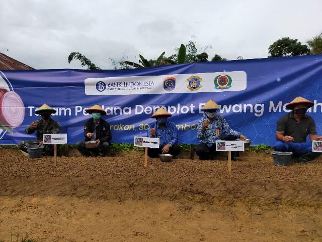 Penanaman perdana bawang merah dilakukan Wali Kota Tarakan dr. H. Khairul M.Kes bersama Kepala Perwakilan BI Provinsi Kaltara, Yufrizal, Senin (30/11/2020). (foto: jendelakaltara.co)