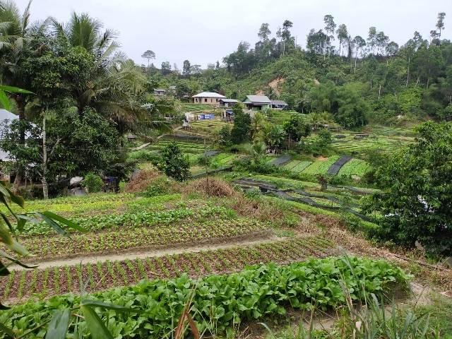 Dana Desa yang dialokasikan Pemerintah Pusat untuk Provinsi Kaltara tahun ini sebesar Rp 503,04 miliar. (foto: jendelakaltara.co)