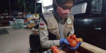 Tomat asal Sebatik diekspor ke Malaysia. (foto: Karantina Pertanian Tarakan)