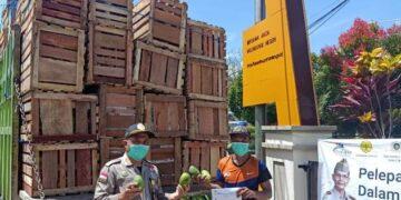Produk pertanian hortikultura seperti mangga, dilepas Karantina Pertanian Tarakan Wilker Nunukan dengan tujuan ekspor Malaysia. (foto: Karantina Pertanian Tarakan)