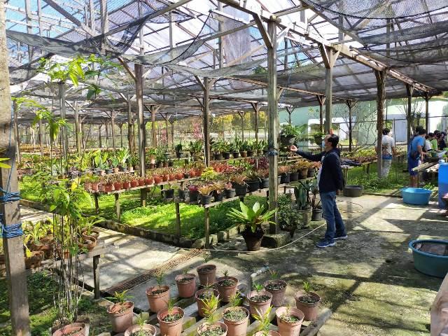 Kebun Anggrek di Kelurahan Pantai Amal berisikan bebeberapa jenis Anggrek Kalimantan dan bunga lainnnya. (foto: jendelakaltara.co)