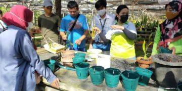 Kegiatan peningkatan kapasitas berupa pengenalan dan pelatihan budidaya tanaman Anggrek kepada sejumlah penggiat tamanan hias dan mahasiswa UBT, Jumat (19/3/2021). (foto: jendelakaltara.co)